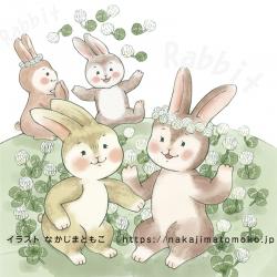 ウサギ白詰草