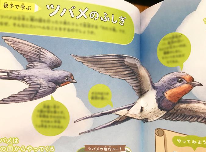 青空を飛ぶツバメのリアルでかわいい児童書の動物イラスト