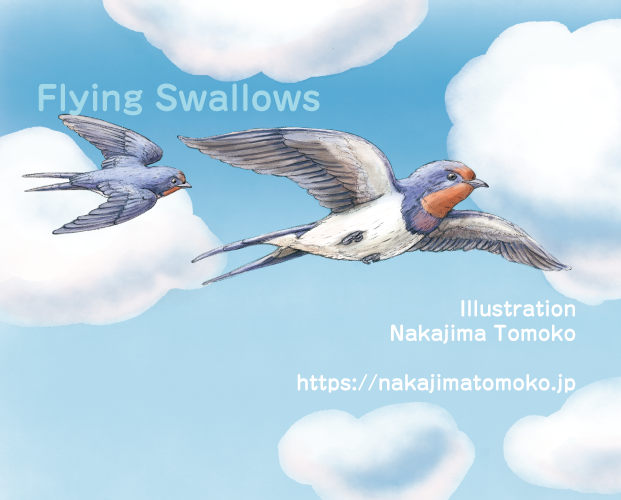 青空を飛ぶツバメのリアルでかわいい児童書の動物イラスト Illustration of a swallows flying in the blue sky