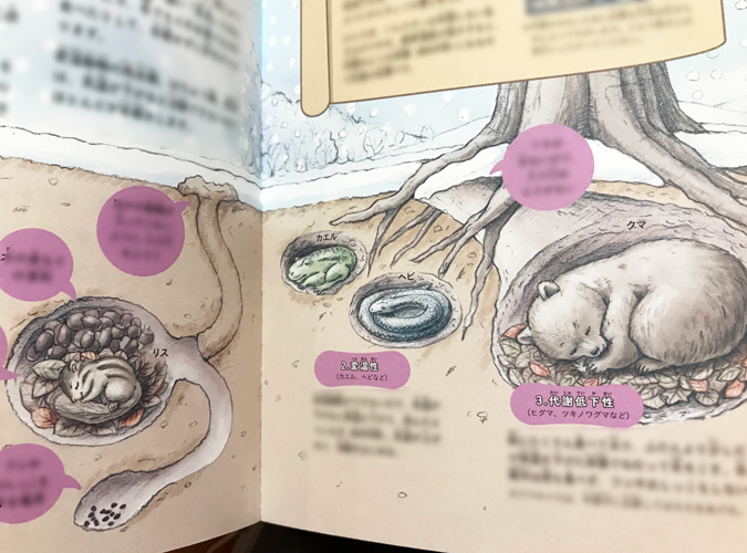雪景色の中で、クマとリスとカエルとヘビが冬眠しているリアルでかわいい児童書の動物イラスト