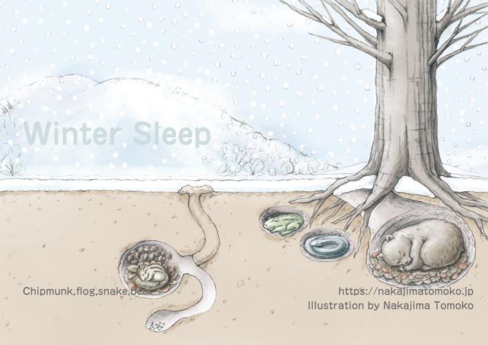 雪景色の中で、クマとリスとカエルとヘビが冬眠しているリアルでかわいい児童書の動物イラスト Illustration of bear and chipmunk and flog and snake are sleeping in the ground in winter